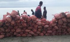 Incautan 235 sacos de ajo introducidos de contrabando desde Haití